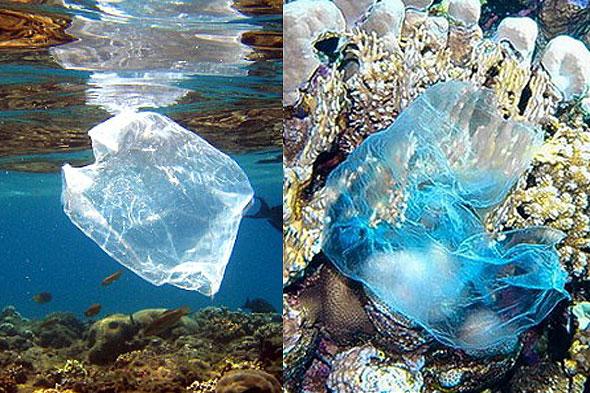 Bags in Ocean